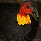 Aussie Scrub Turkey by Penny Smith