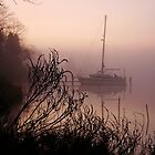 Warm Fog by Eileen McVey