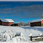WINTER BARNS by Sandy Stewart