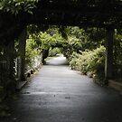 Into My Secret Garden by Karen Clark