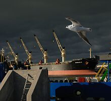 Gull and Baltic sea port in Klaipeda by Antanas