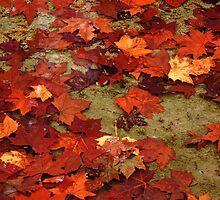 Autumn leaf spektrum by Mauro Rodrigues