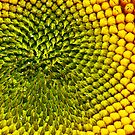 Patterns of a Sunflower by Jennifer Hulbert-Hortman