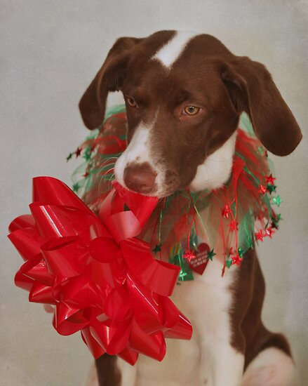 Christmas Pup by Renee Blake