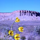Flowers and Mesas by Paul Magnanti