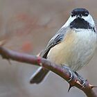 Chickadee Staring At Me by William Brennan