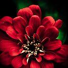 red by Siju Doniston