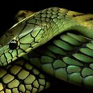 Green Mamba by Dennis Stewart