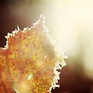 as autumn gently fades away by Tamara Brandy
