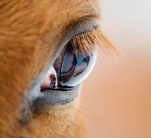 Equine Eye by KBritt