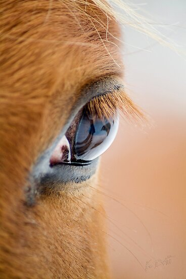 Equine Eye by KBritt