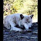 Sleepy Wolf by devinadewi
