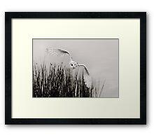 """Night Owl"" Framed Print"