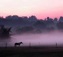 magic morning/magic horses by WonderlandGlass