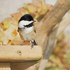 Adorable - Chickadee by Lynda   McDonald