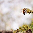 Busy Bee by Erica Yanina Lujan