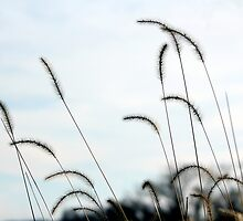 Wispy Weeds by Deborah Crew-Johnson