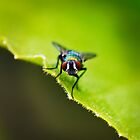 The Fly by Eleanor Godley