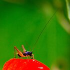 The bug by Eleanor Godley