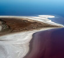 Sting Ray - Lake Eyre by Jenny Dean
