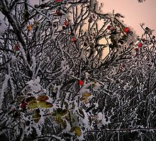 Rose Hips and Frost by Charles & Patricia   Harkins ~ Picture Oregon