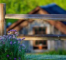 June Morning at The Inn at Cedar Falls by jimcrotty