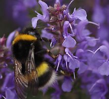Bumble bee by James Hennman