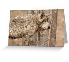 Wolf in Camo Greeting Card