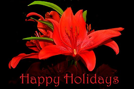Happy red Lily Holidays by cclaude