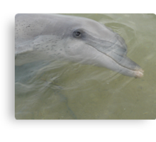 Dolphin at Monkey Mia,  Canvas Print