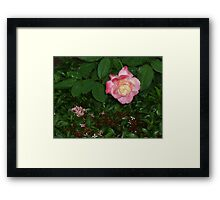 The regal queen flower bowing gracefully to kiss. Framed Print
