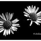 Twin daises in b/w by bluetaipan