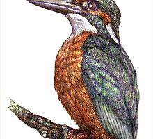 Kingfisher by Indigo46