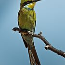 Swallow-Tailed Bee-Eater by Rashid Latiff