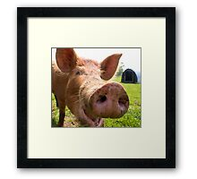 A happy Tamworth pig Framed Print