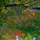 Where brances touch the surface of fall by MarianBendeth