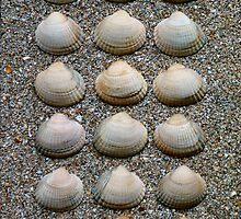 HEART SHELLS ON SAND by RainbowArt