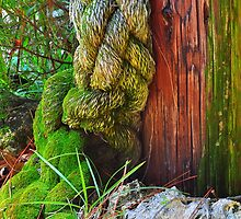 Old Rope by joevoz