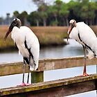 Wood Stork on a Pier by joevoz