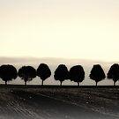 Lancaster Tree Line by reindeer