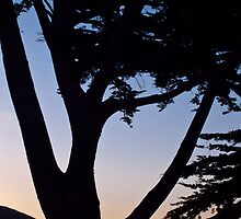 cypress tree near the Cambria coast at sunset by David Chesluk