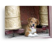 Tikse Puppy Canvas Print