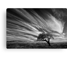 Clouds and Tree - Dog Rocks Canvas Print
