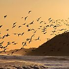 Oystercatchers at sunset by beavo