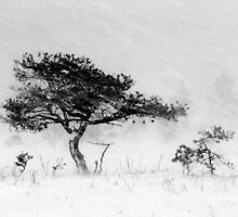 9.12.2011: Alone in the Blizzard I by Petri Volanen
