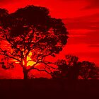 Sunset in red by Cleber Photography Design