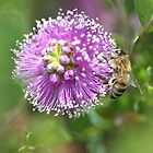 Bee September 2012 by saharabelle