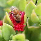 Bee December 2012 by saharabelle