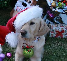 Golden Retriever with droopy Christmas Hat by Sally Robinson