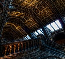 NHM Ceiling by Alan E Taylor